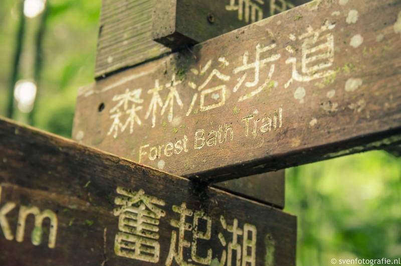 Fenqihu Forest Trail