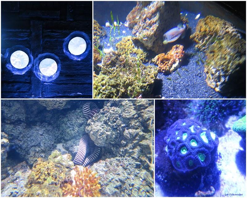 SEALIFELondon Aquarium-KLOOK客路-17docintaipei (15)