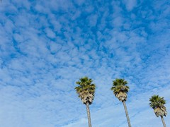 Light L16: Palm Trees