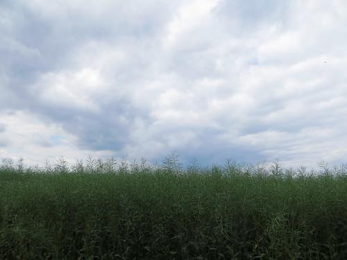 20170531 04 261 Regia Wolken Feld