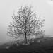 🐑🐑🌳🐑🐑 Popular tree by marikoen