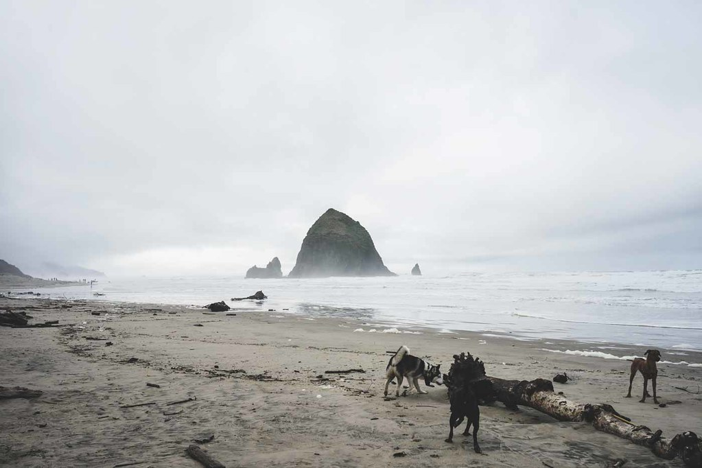 1-cannon-beach-dogs-3