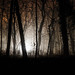 Evil Dead Forest by wolfi8723