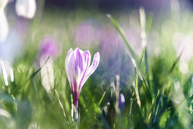 Spring feeelings...