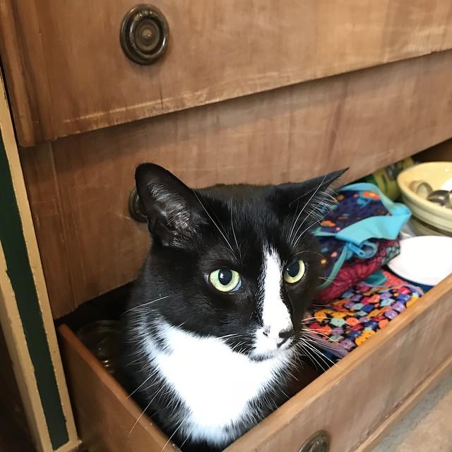 Just sitting in mah drawer.