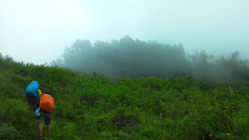 misty Maribuhok forest