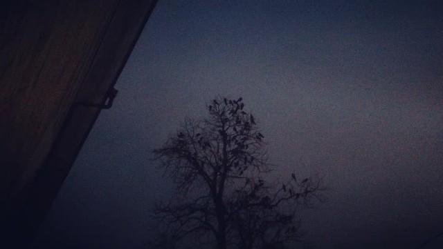 Crown or crows