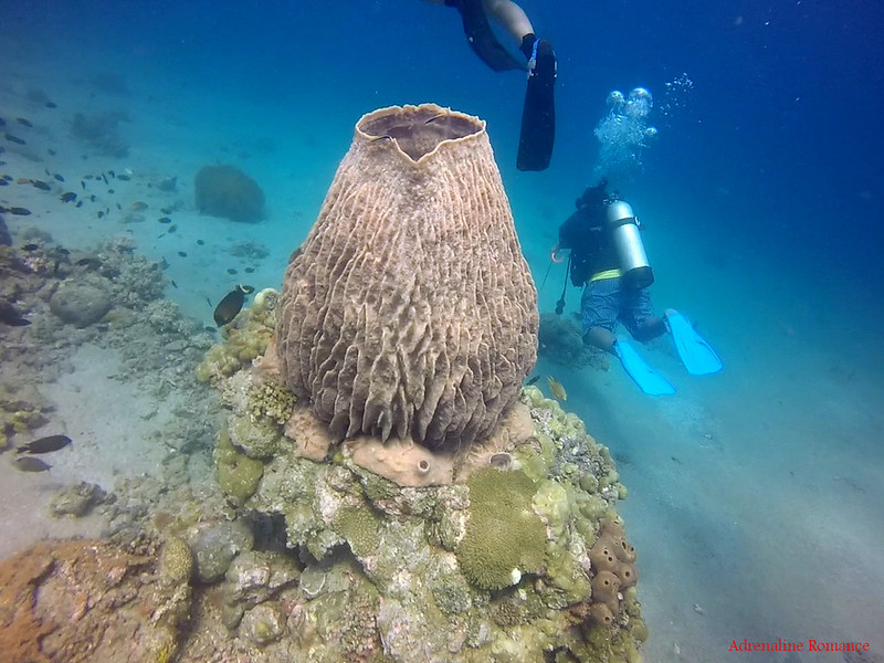 Giant barrel sponge