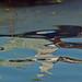 Paignton Harbour Reflection 01