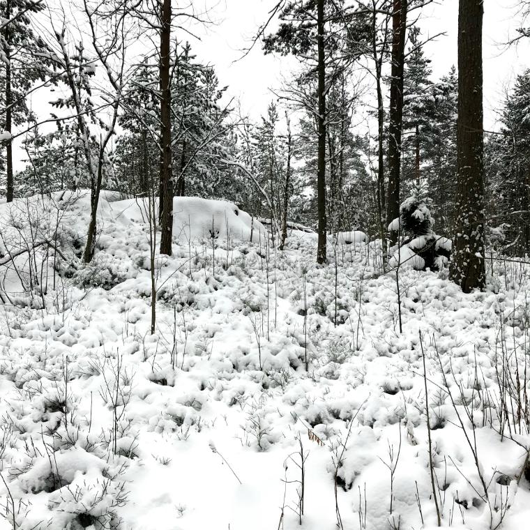 lumimaisema
