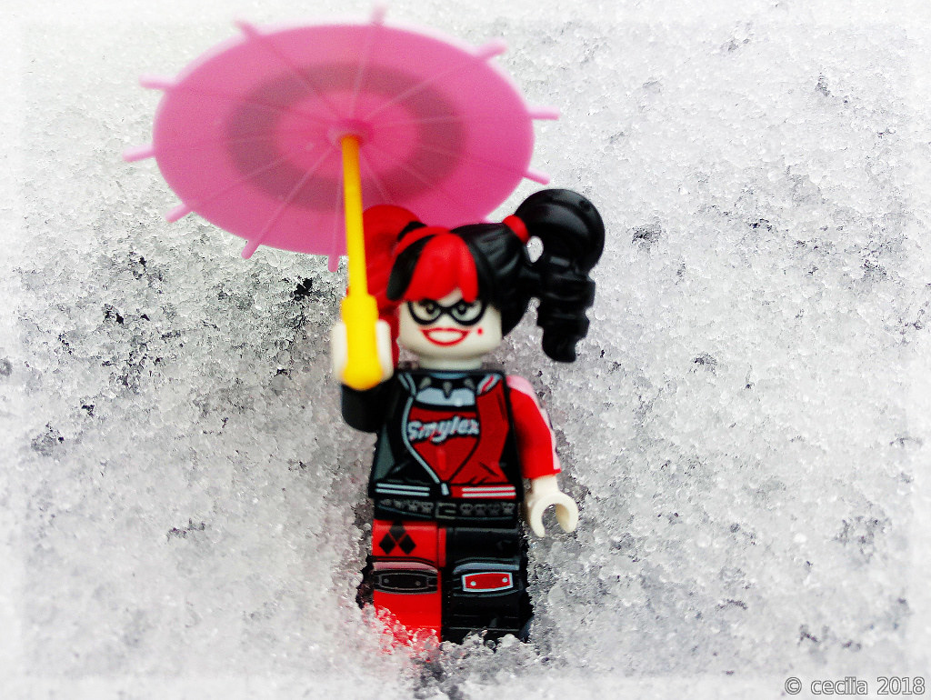 harley quinn goes for a walk in the snow