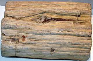 Fossil wood (Yld'aa, banks of the Indigirka River, Yakutia, Siberia, Russia) 1