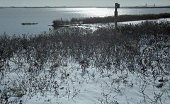 Winter At Jamaica Bay Wildlife Refuge