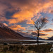 Lone Tree, Glen Etive