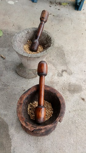 Grinding coffee beans. From Mi Cafecito: A Coffee Tour for a Tea Lover