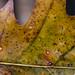 Oak leaf details