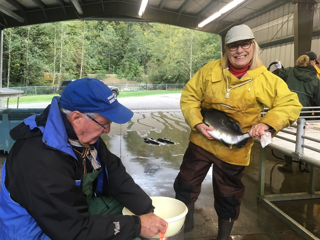 25. Rod and Ruth at Chilliwack Hatchery for pink egg take Oct 10.2017