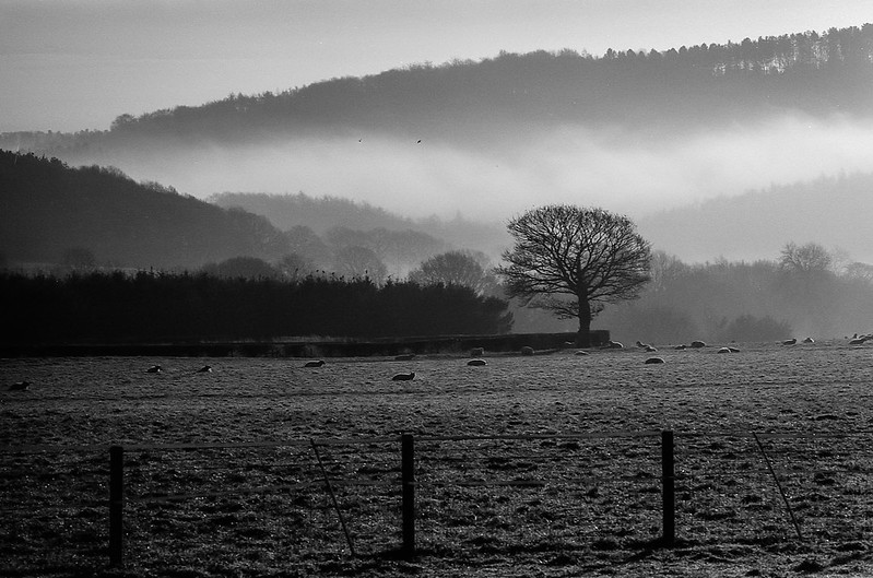 FILM - Pastoral mist (landscape)