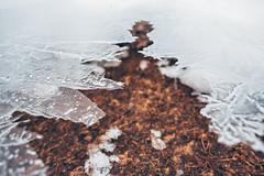 Ice #14/365