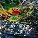 Ducky Splash