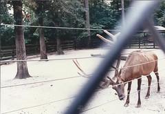 Elk---Birmingham, Al.