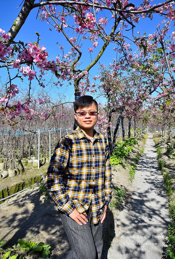 芬園花卉休憩園區-櫻花園區201810