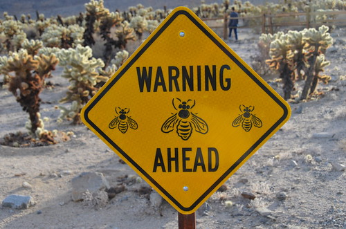 Joshua Tree - Cholla garden bee warning