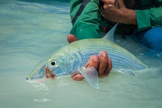 CI-Bonefish