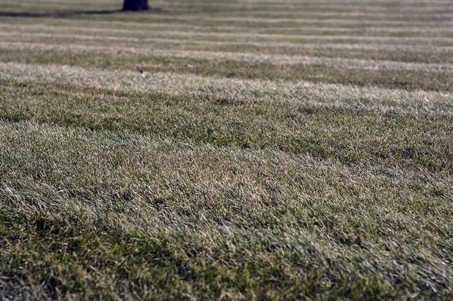 Jan 31 - A landing strip for spring