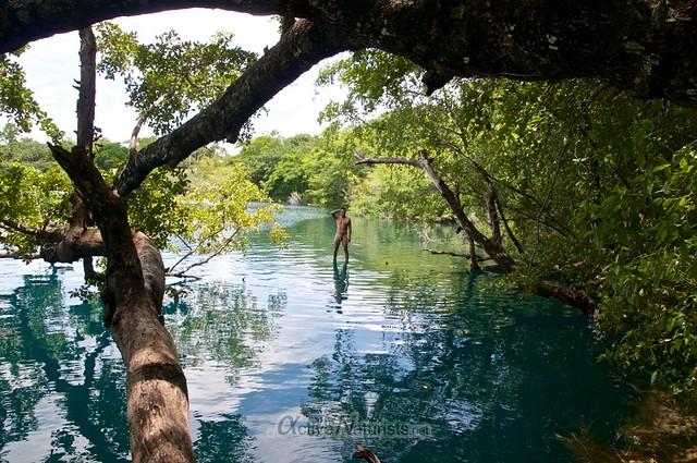 naturist tree 0001 Cenote Azul, Chetumal, Quintana-Roo, Mexico