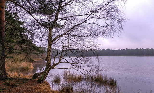A winter's day at our Bullensee ...