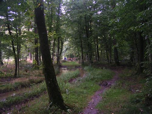 20070829 11306 0705 Jakobus Wald Weg Matsch Pfütze Wasser Brücke