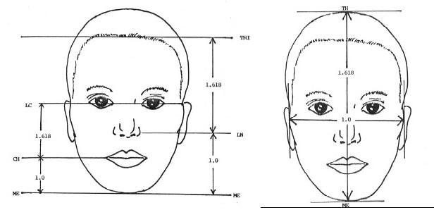 Pengukuran golden ratio pada wajah.