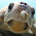 38th International Sea Turtle Symposium