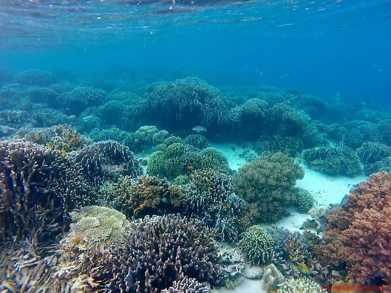 Colase Marine Sanctuary, Samboan