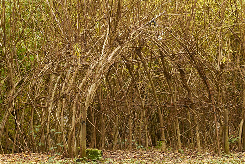 living willow arch