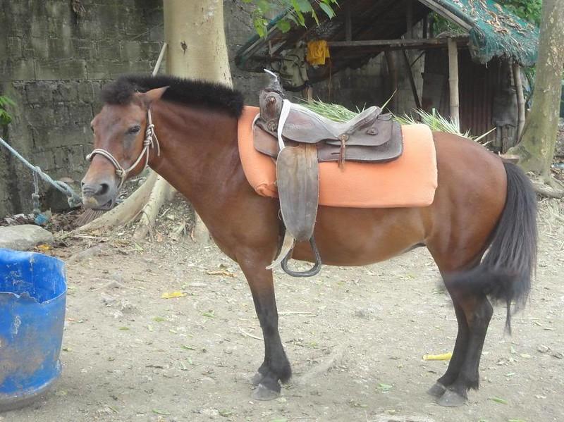 Papa Kit's horses