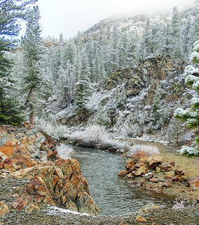 Frosty Walk along Tuolumne River, Yosemite 5-15
