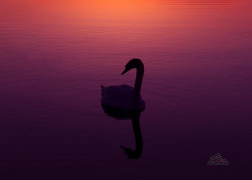 Dawn Silhouette