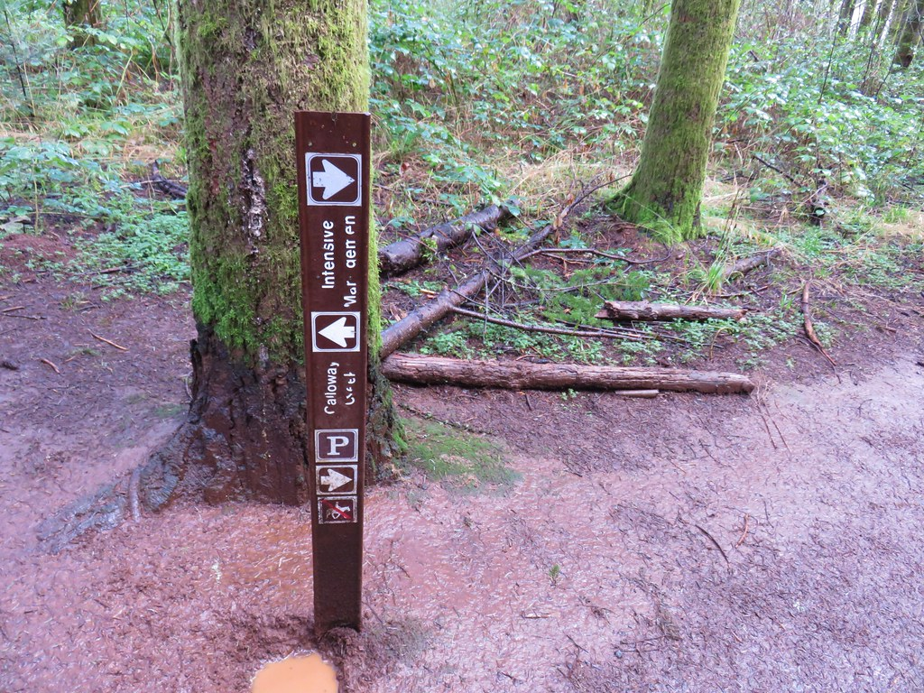Calloway Creek Trail junction with the Intesive Management Trail