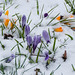Signs of Spring in the snow