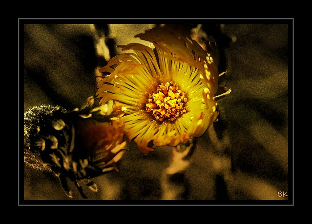 110403-PA-15 - Flower - Blume