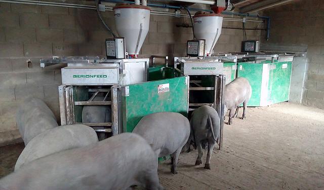 Uno de las soluciones de Gerionte Technology instalada en una granja porcina española.