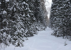 The clearing among the coniferous forest