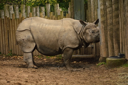 Chester Zoo (902)