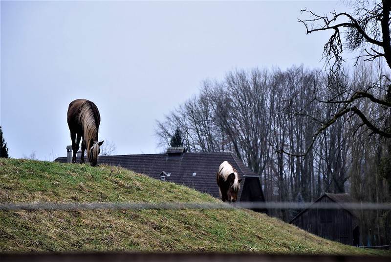 Horses 27.01 (3)