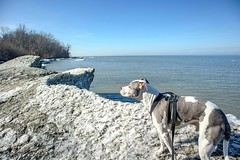 Juneau at Lake Erie Bluffs.