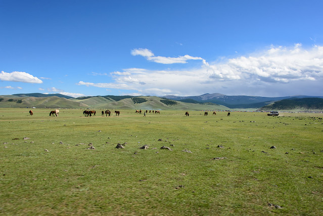 Orkhon valley, Mongolia - Meadow