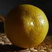 Lemon: 38/365