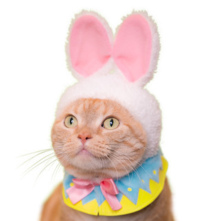 Q萌貓咪讓你的復活節更有趣~!奇譚俱樂部【可愛貓咪頭套。復活節貓】貓星人專屬轉蛋 第18彈!!かわいい かわいい ねこイースターちゃん